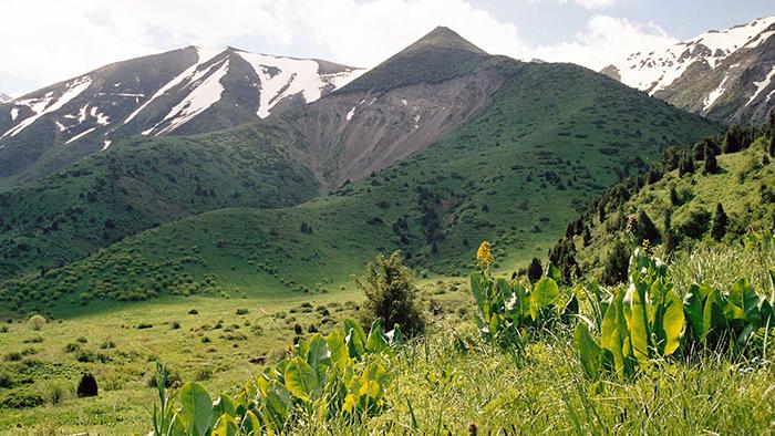 Оңтүстік Қазақстан облысы