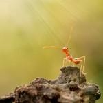 ant-macro-photo